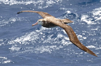 Birds of the Southern Oceans